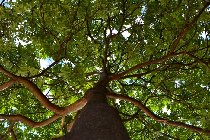 An Easy Way to Celebrate: Volunteering on Arbor Day
