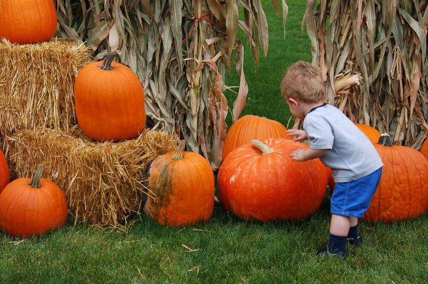 Five Fall Family Fun Activities You Don't Want to Miss