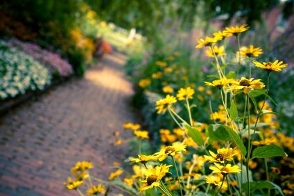Smart Landscaping for Energy Savings